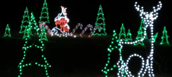 Stag and Christmas Trees lighted scene